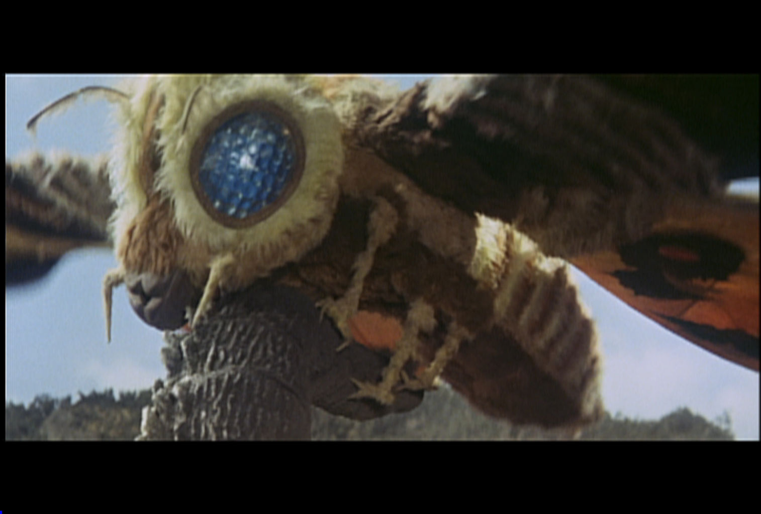 Don't Fear Mothra – Her Eyes Inspired Your Glasses' Anti
