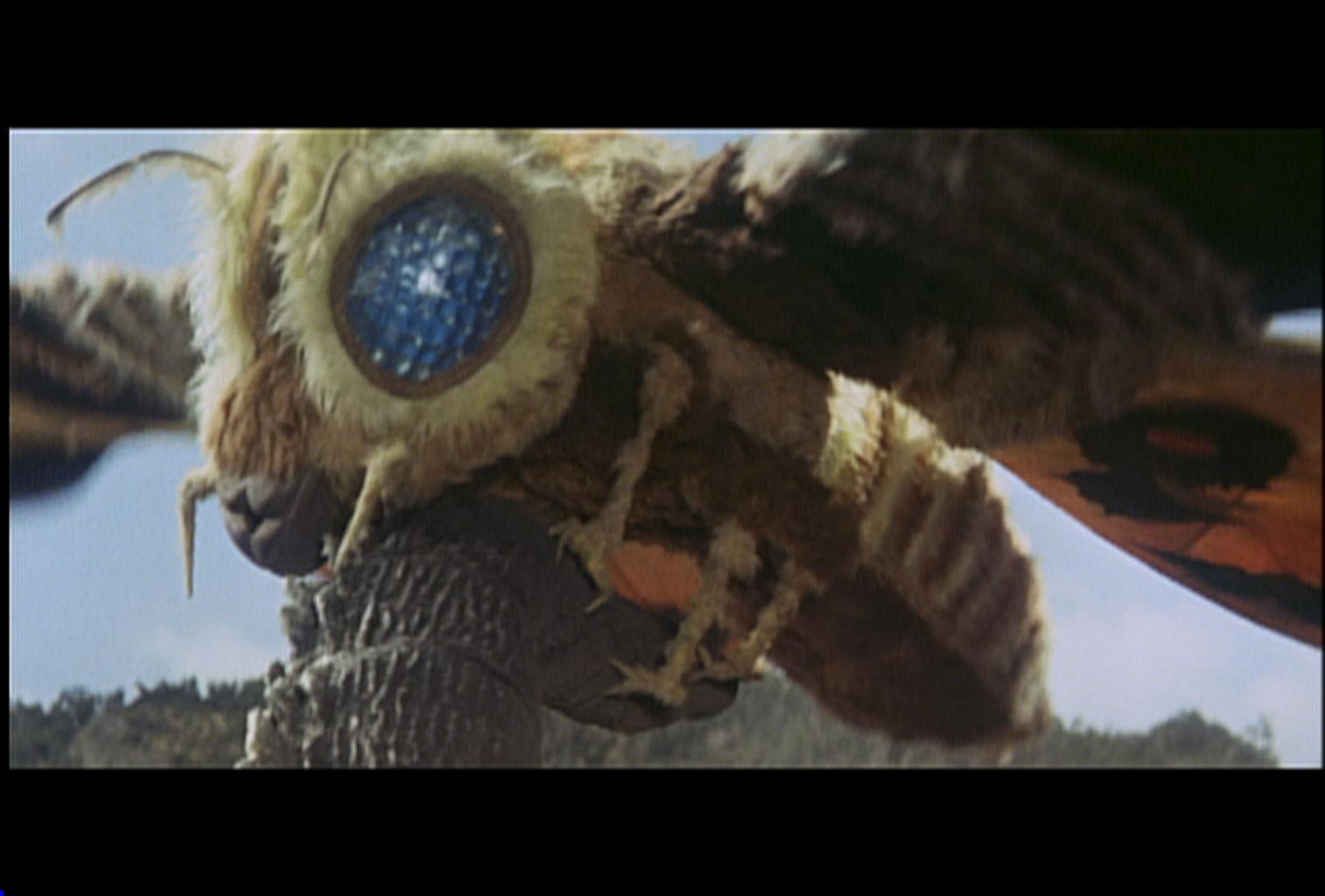 Godzilla vs. Mothra | Zenni Optical