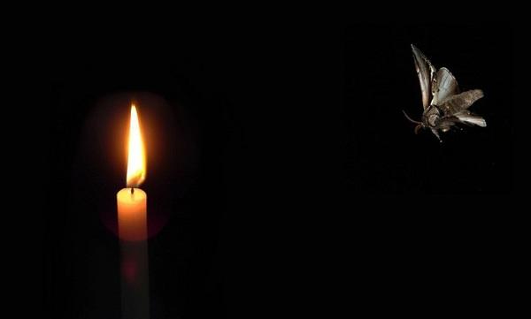 A moth to a flame | Zenni Optical