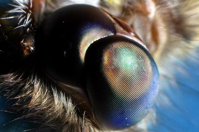 Moth eye does not reflect light | Zenni Optical